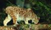 Nature & Animals # 8