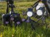 Tutti Fotografi di settembre: Sony A7C, macrofotografia, Canon Eos 1DXMK III
